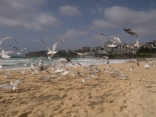 Impression from Bondi Beach (Actually I was chassing those birds a couple of time for this picture :P)