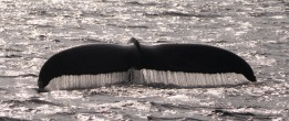 Close up of the whale tail