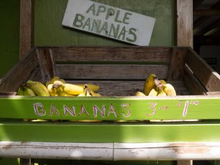 Delicious fruit stand
