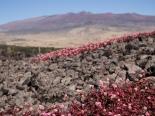 Impression on the way up to Mauna Kea