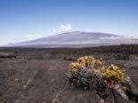 View to Mauna Kea