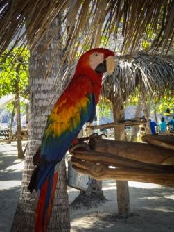 On Tortuga Island