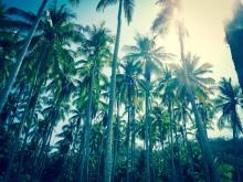 Tortuga Island Impression