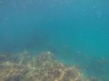 Snorkeling near Cabuya