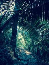 Cabo Blanco jungle :)