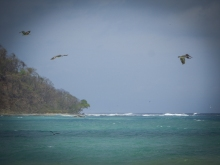 Pelicans on the Cabo Blanco Beach