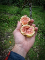 Mmmhhh some delicious Guava from a wild tree