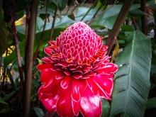 Amazing flower