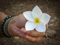 Plumeria my favorite flower