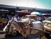 Local fruit market in Leon