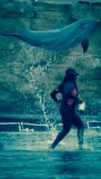 Yeah jumping dolphin