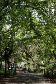 Central Park Impression